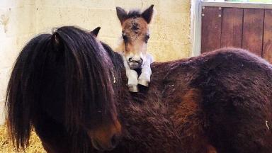 Home search: Missouri and her six-week-old foal Jefferson.