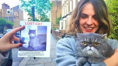 Found: Lost cat was instantly recognised.