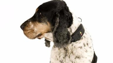Monaghan had seen the electric training collar being used on a dog and told the pet owner: