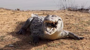 A woman in her 40s is still missing after being dragged away by a crocodile off the coast of Australia.