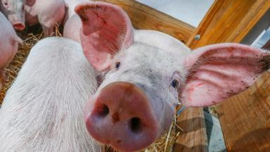 Animal welfare activists have reacted angrily to the plans.