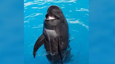 Bubbles the whale was the  oldest pilot whale in captivity before she died.