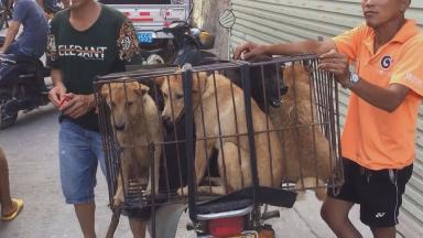 Around 200 dogs are killed for human consumption in Yulin, China, every day