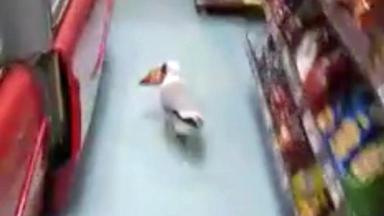 Aberdeen shoplifting seagull