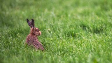 Animals: Rabbits and birds targeted with weapons at Edinburgh Park.