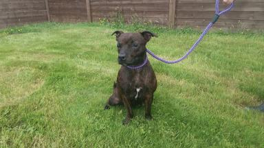 Abandoned: Eva has been handed over to the Scottish SPCA.