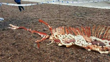 Gruesome: The 'remains' on the banks of Loch Ness.