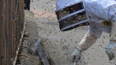 Battlefield bees swarm