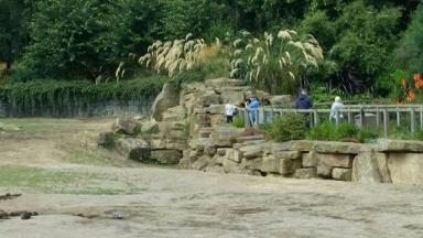 The boy could be seen standing inside the rhino enclosure holding the hand of a man.