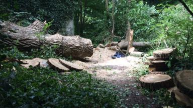 Water of Leith: Another man suffered minor injuries after the tree collapsed.