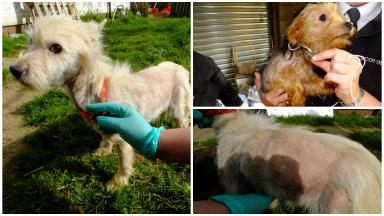Neglect: The dogs were all taken into care.