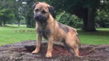Found safe: Rosco will be returned to his owner later this week.