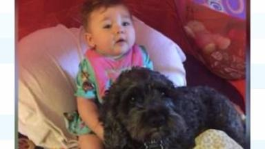 Polo the dog stayed by Viviana's side and perished in the fire.