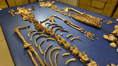 Remains: The bones have been examined by academics.