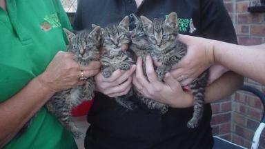 The rescued kittens were treated by vets for cuts.