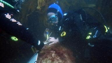 Utrecht: Divers examine canon found at wrecksite.