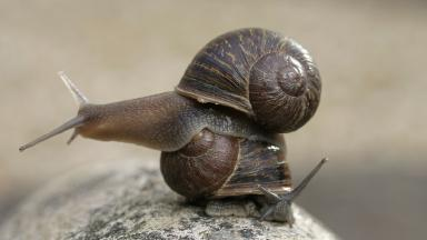 Commonly the shell of a snail spirals in a clockwise direction.