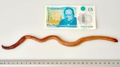 Dave, posing alongside a £5 note