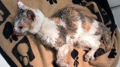 Put down: Mitsi was found on an Inverness street.