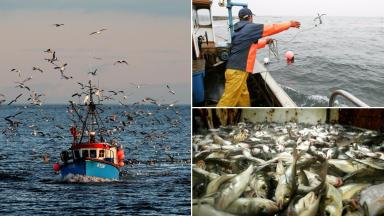 Fresh waters: Fishermen will be able to catch more cod, saithe and mackerel.