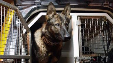 Police Scotland search dog Rudi