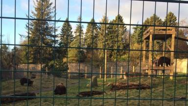 Wildlife park welcomes first new brown bears in 30 years