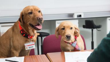 Assessment: Dogs were brought in during group discussion.