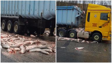 Fish spilled onto A9 from lorry March 17 2017