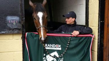 Grand National-winning horse One For Arthur.
