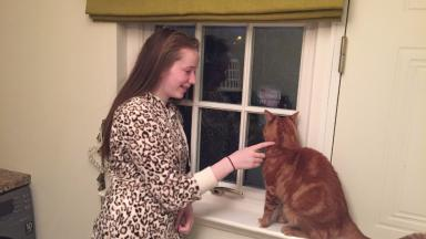 Tom Cat reunited with owners after 6-months