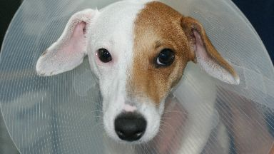 Jack Russell turns Jane Russell