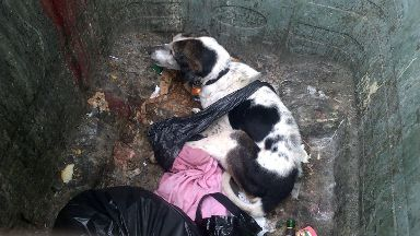 Dog dumped in bin and left to die.