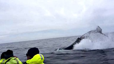 short video from Monday May 29 afternoon cruise at Tiumpan head humpback whale uploaded Wednesday May 31 2017