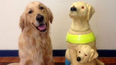 Guide dogs: Similar charity box was stolen (file pic).