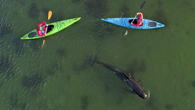 Whale rescued by kayakers in Shetland