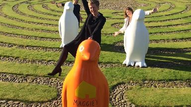 maggie's penguins