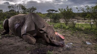 Brent Stirton won the award for his image Memorial to a Species