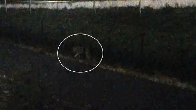 The tiger (circled) can we seen walking through a Paris suburb in the dark.