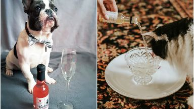 Cats and dogs can enjoy cat and dog friendly pawsecco and wines this Christmas