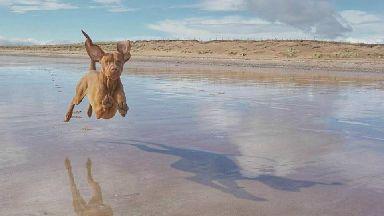 Zander The Flying Dog