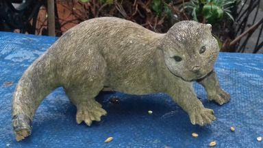 Otter: Found in cat shelter.