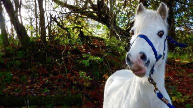 Animal Support & Rescue - Bajo the horse