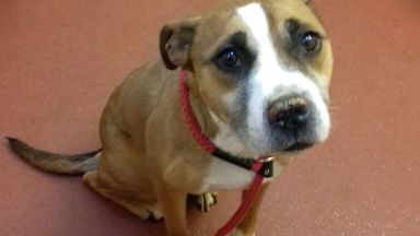 Bonnie: Dog now in care of Scottish SPCA. Glenrothes Fife