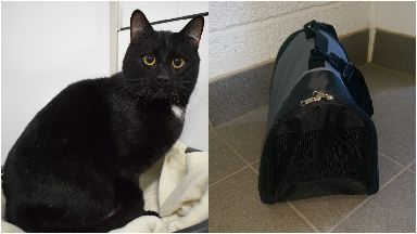 Gustav cat was discovered in a carrier on Firbank Grove