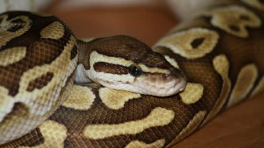 Python, snake, coiled, stock/generic image