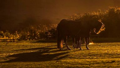 Horse power leads to late-night delays on M11 in Essex