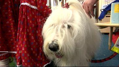 Canine Concern Scotland