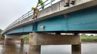 Fire crews rescue second sheep from bridge in week