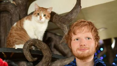 Madame Tussauds unveils Ed Sheeran figure at cat cafe