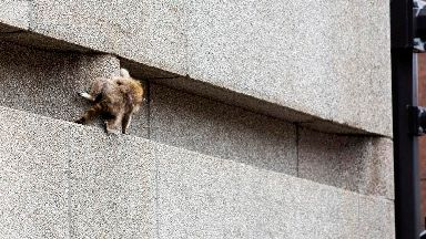 Raccoon released into wild after 25-storey tower climb